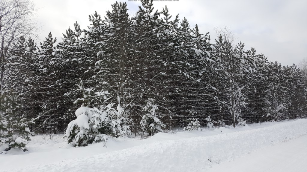 PLANTATION RD, Minden Ontario, Canada