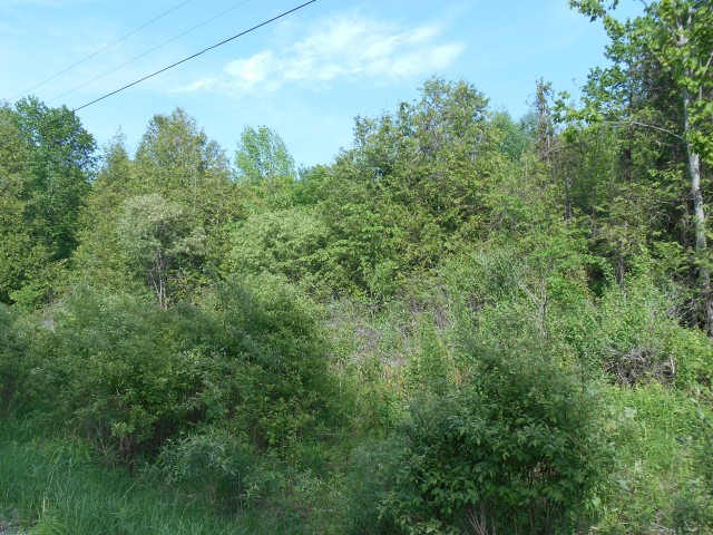 pt lot 15 rock road, Douro-Dummer Township Ontario, Canada