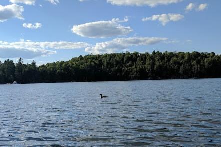 24 kingfisher lane, North Kawartha Ontario, Canada