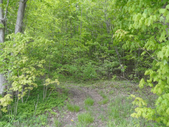 pt 2  pt lt 7 con 8 beatty south lot 2 rd, Thurlow Ontario, Canada