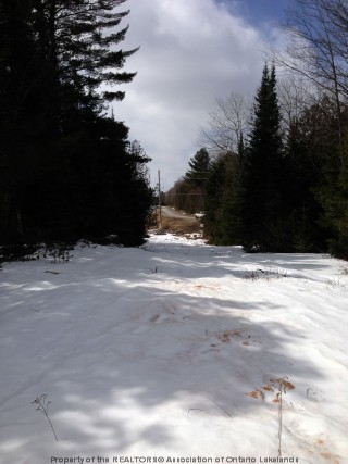 opened road allowance off of  ingoldsby rd, Minden Ontario, Canada