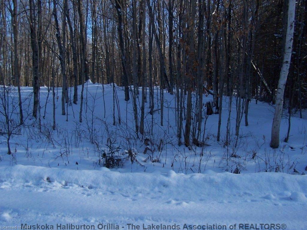 8 SKI RIDGE Trail, Haliburton Ontario, Canada