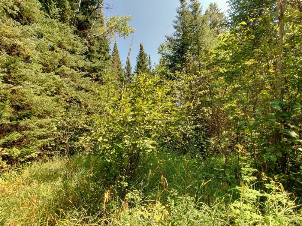 Pt Lt 24 Meteorite Lake Rd, Highlands East, Ontario (ID 222048)