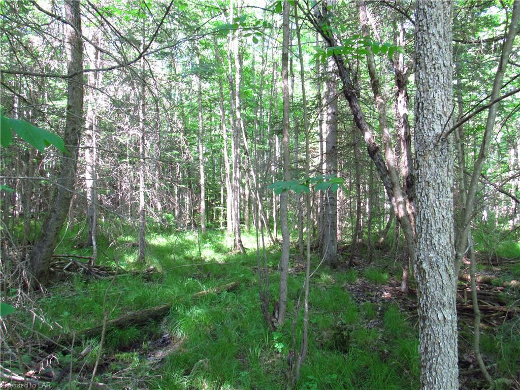 211 MADILL Road, Katrine, Ontario (ID 103353)