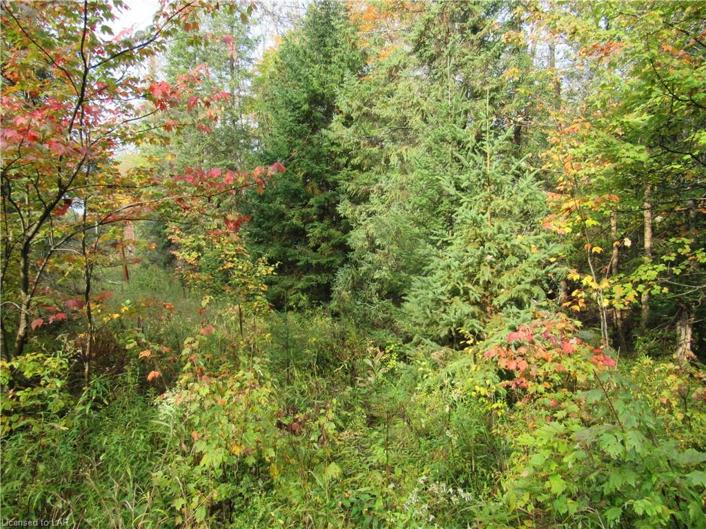 FERN GLEN Road, Mcmurrich, Ontario (ID 224028)