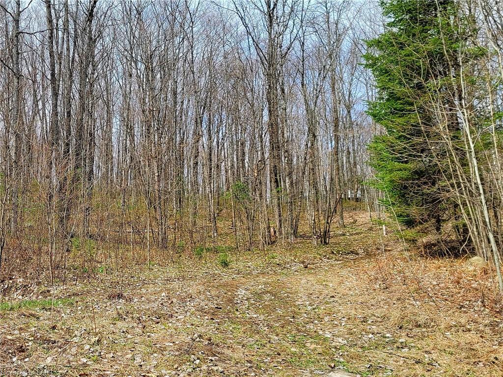 GELERT Road, Haliburton, Ontario (ID 40107253)