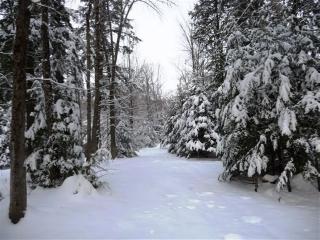 Pine Tree Crescent