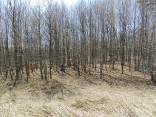 PT LOT 15 WOODCOCK LINE, City Of Kawartha Lakes, Ontario (ID 1235527)