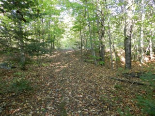 4141 GELERT ROAD (CTY RD 1), Minden Hills, Ontario (ID 1237850)