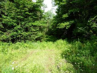 �BOBCAYGEON�RD��, Minden, Ontario (ID 461601000066560)