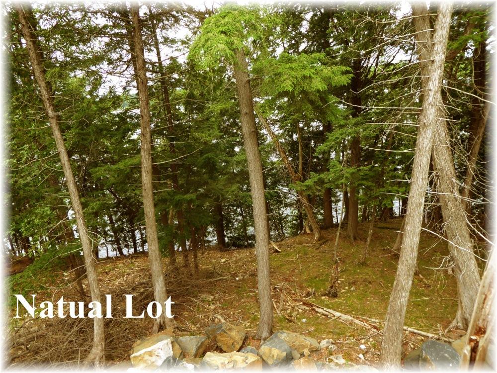 8 Bear Run Jack lake Estates , Apsley, Ontario (ID 1641 lin)