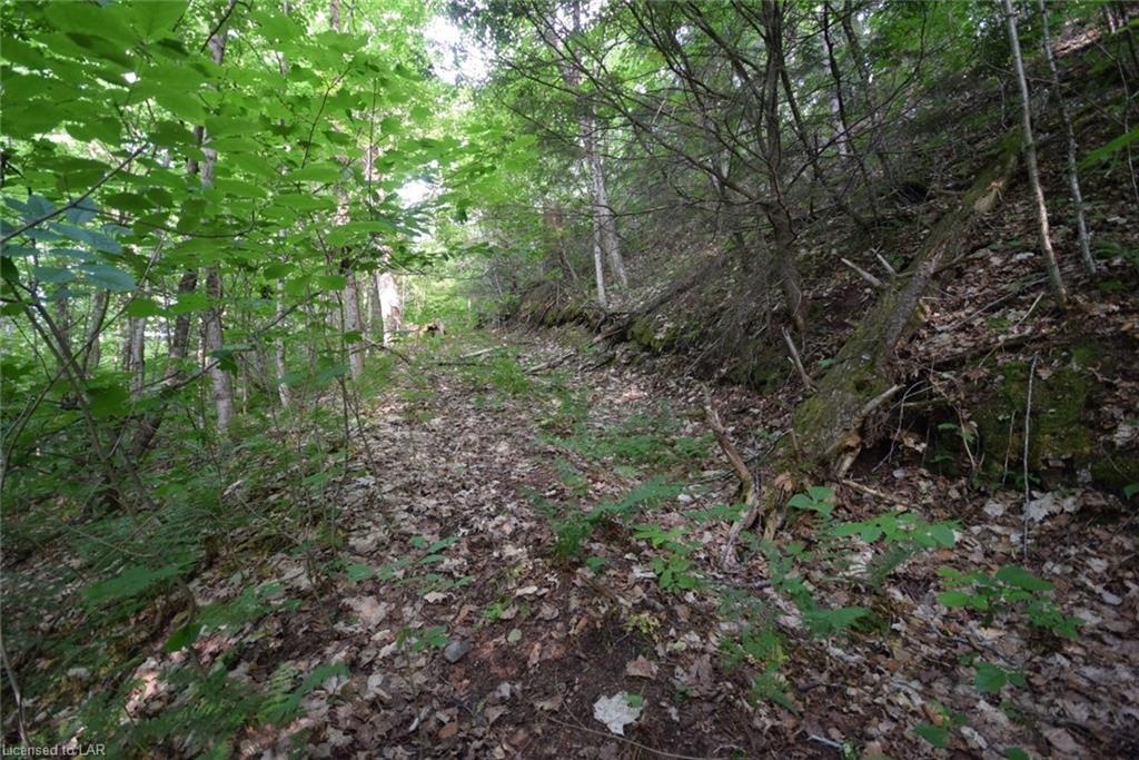 . FRED JONES Road, Haliburton, Ontario (ID 40032570)