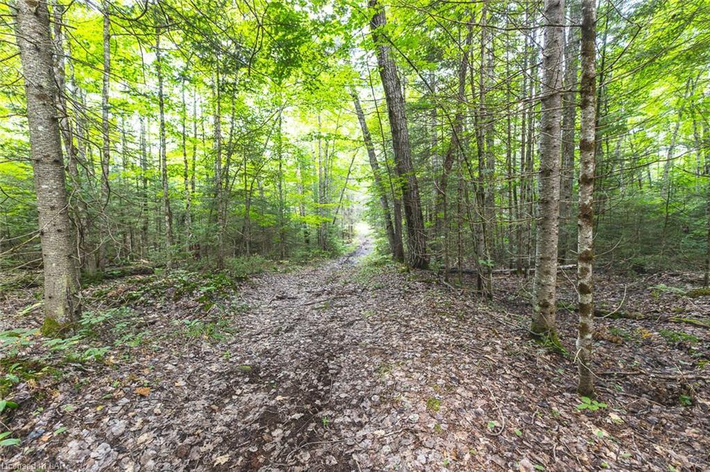 LOT 24 GLAMORGAN Road, Haliburton, Ontario (ID 40157519)