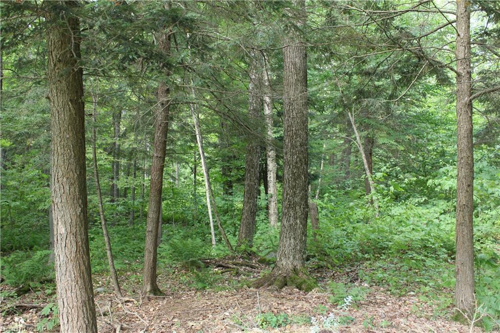 1574 BUCKSLIDE Road, Algonquin Highlands, Ontario (ID 216837)