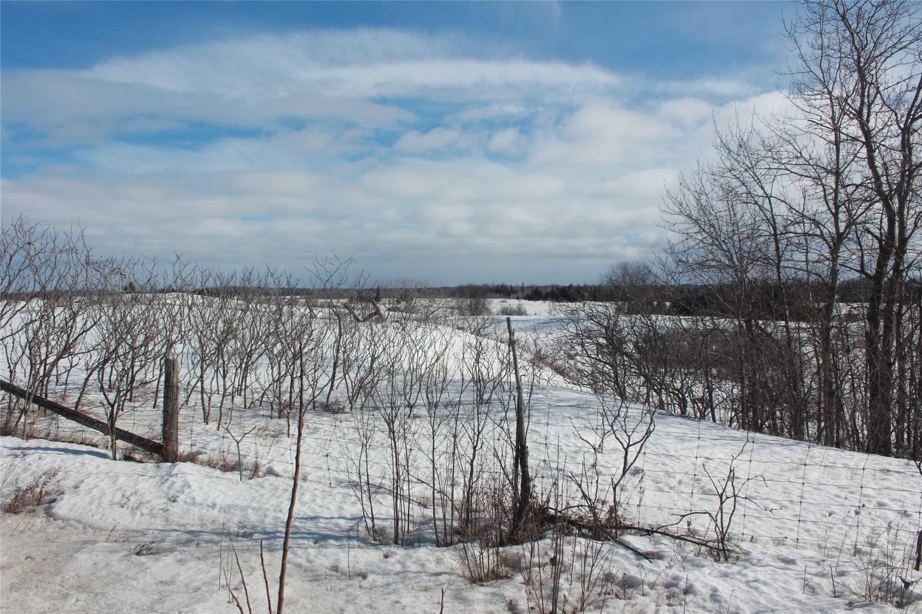 Pt Lt 3 Rohallion Rd, Kawartha Lakes, Ontario (ID X5135752)