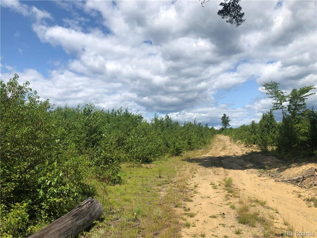 Timberland Storeytown Road, Storeytown, New Brunswick (ID NB061644)