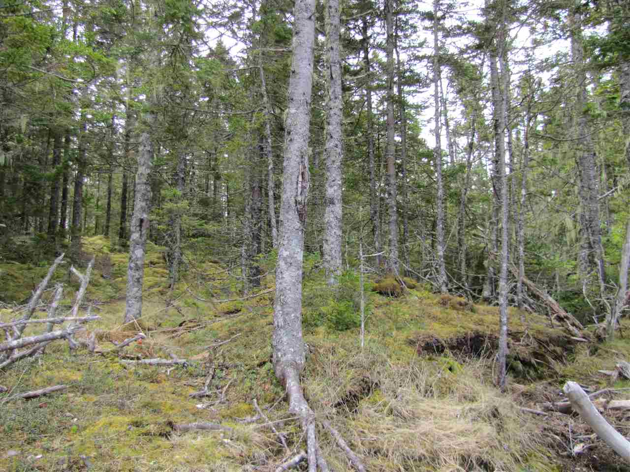 Lot 5 Hirtle Island, Lahave Islands, Nova Scotia (ID 201911548)