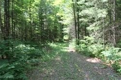 5238 County Rd 121 Rd, Minden Hills, Ontario (ID X4678347)
