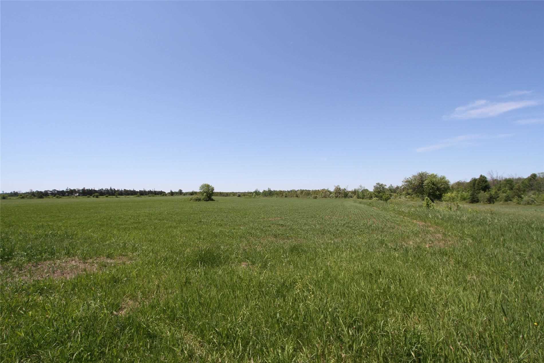 Lt 17 Centennial Park Rd, Kawartha Lakes, Ontario (ID X4795681)