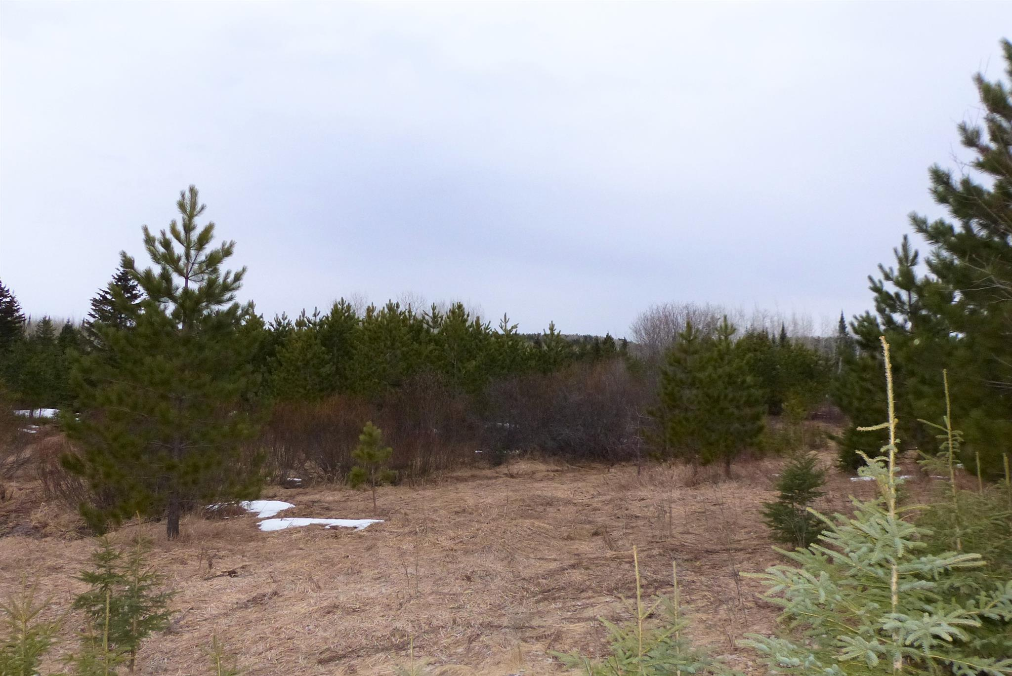 Con 4 Kivela Road W, Neebing, Ontario (ID TB200747)