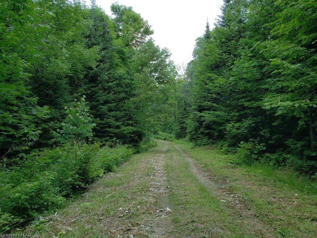 - ALEXANDER Road, Minden, Ontario (ID 207742)