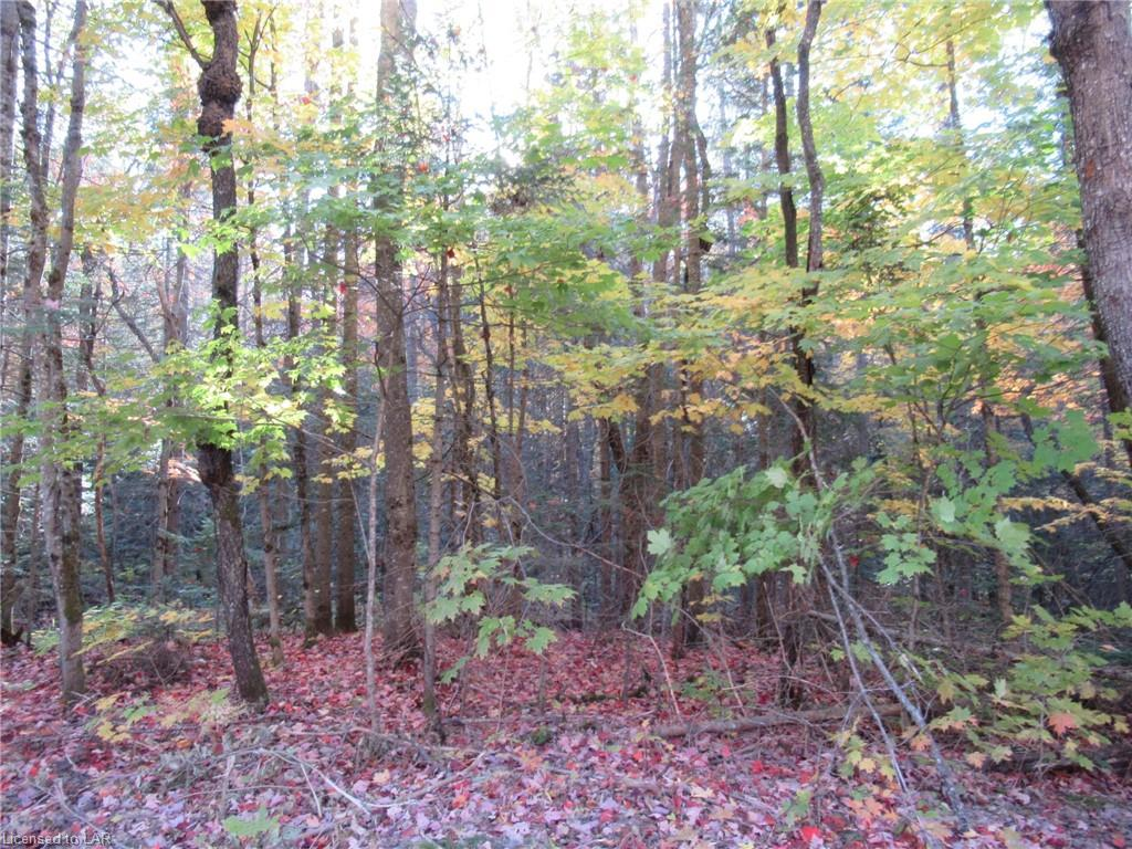 LOT 4 WHITNEY Road, Perry Township, Ontario (ID 227814)