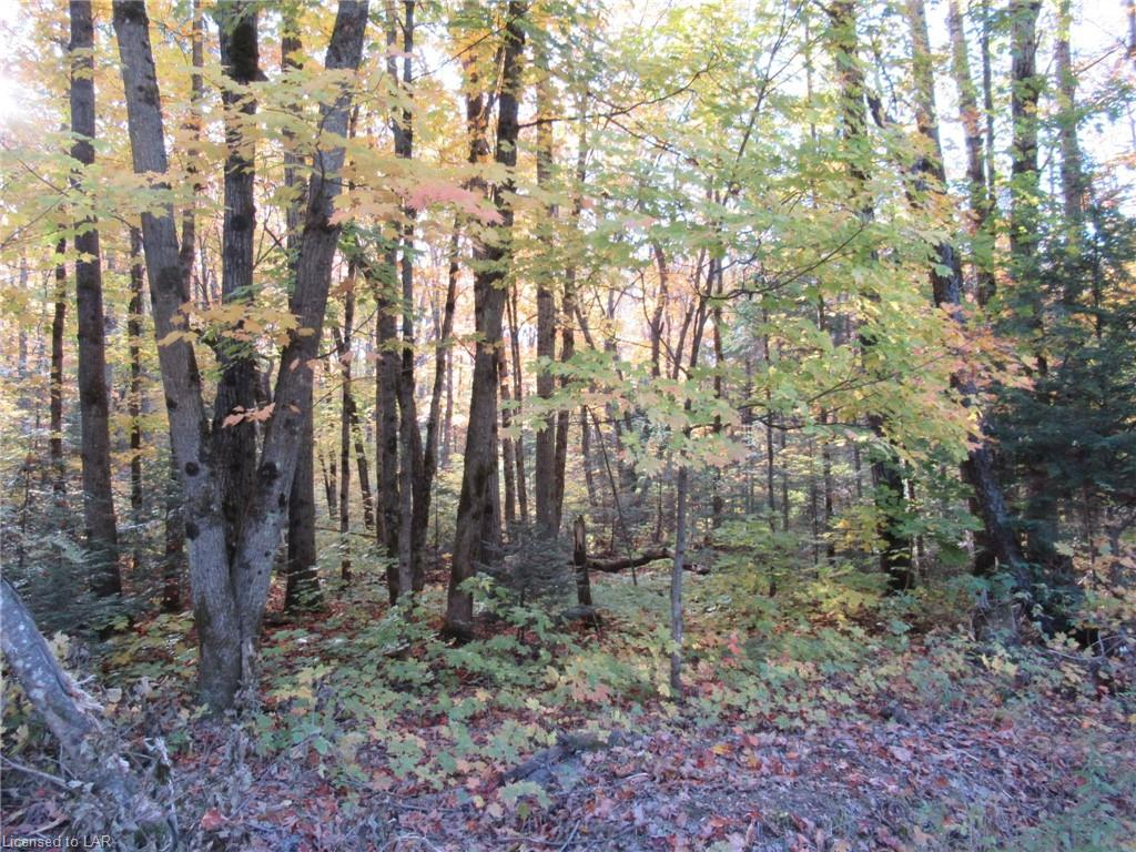 LOT 6 WHITNEY Road, Perry Township, Ontario (ID 227928)