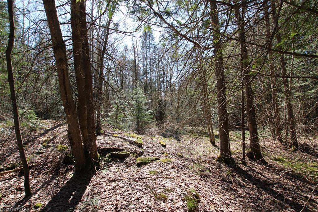 NA 534 Highway, Nipissing, Ontario (ID 40103124)