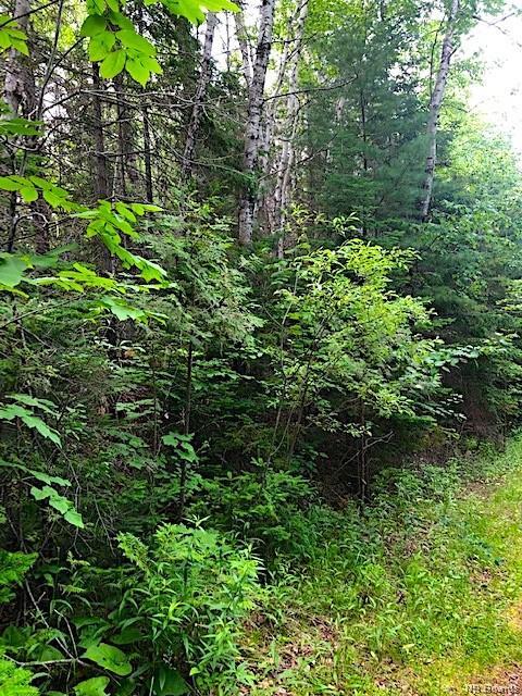 Lot 1 8 Route, Blissfield, New Brunswick (ID NB038811)