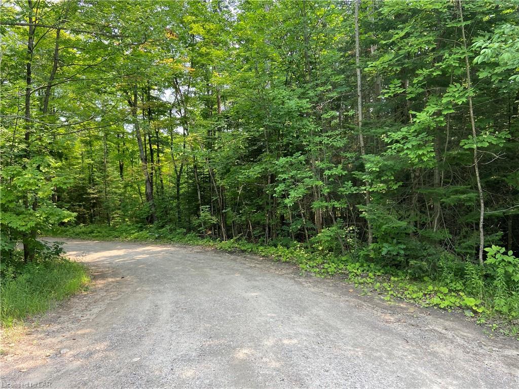 35 Highway, Minden Hills, Ontario (ID 40149294)