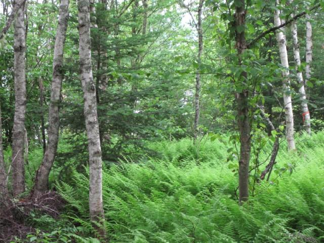 44 Mount Prospect Road Unit# LOT 2, Smithtown, New Brunswick (ID SJ180157)