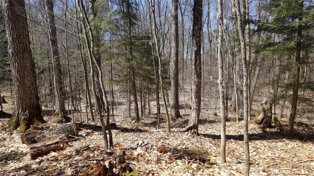 LOT 1 MILLIE'S Way, Burk's Falls, Ontario (ID 40123180)