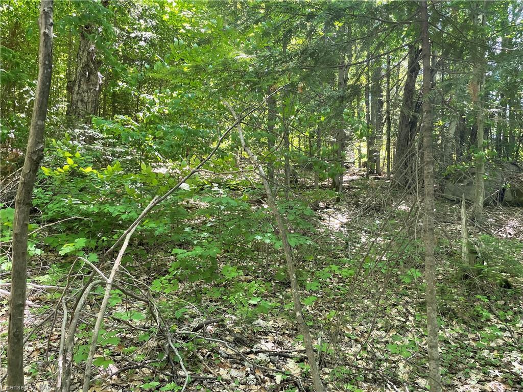 TOWER Road, Sundridge, Ontario (ID 40129337)