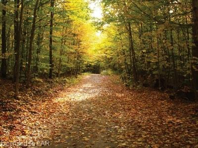 647 SKYLINE Drive, Katrine, Ontario (ID 40108321)