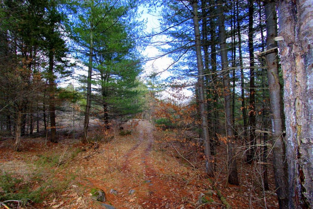 Holleford Road, South Frontenac, Ontario (ID K20000442)