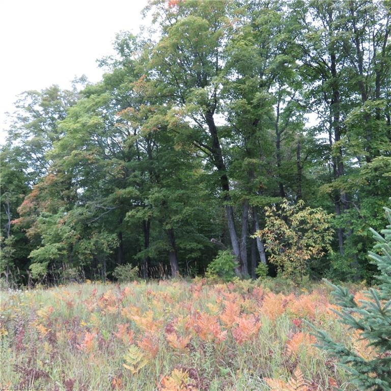 LT 16 CON 14 PCL 19377, EAST MILLS Township, Arnstein, Ontario (ID 224070)
