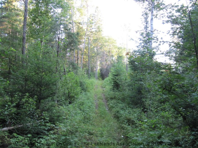 KEARNEY RD East, Kearney, Ontario (ID 521600079)