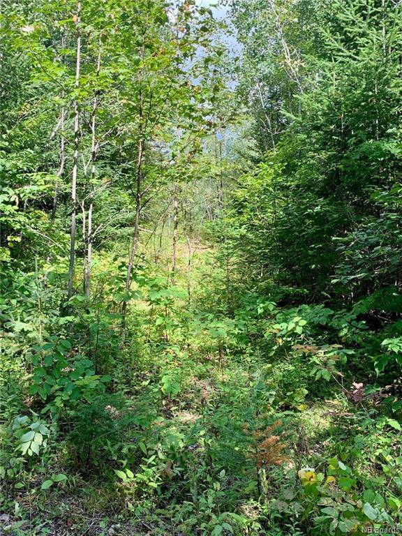 Vacant Lot  2894 Route 3, Harvey New Brunswick, Canada