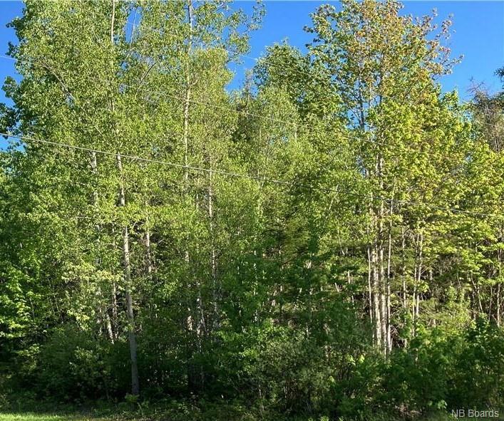 Lot Boone Road, Three Tree Creek New Brunswick, Canada