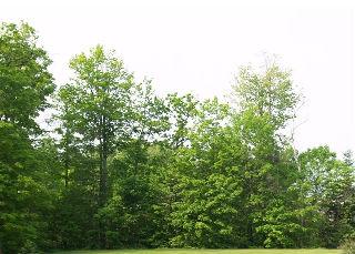 9603  GOLDSTEIN  RD    A, Severn Township, Ontario, Canada