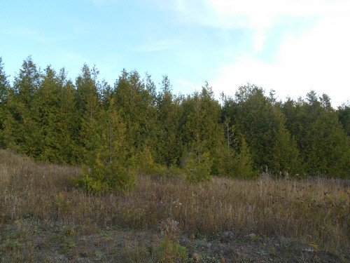 Pt Lot 6 County Road 4, Douro-dummer Township Ontario