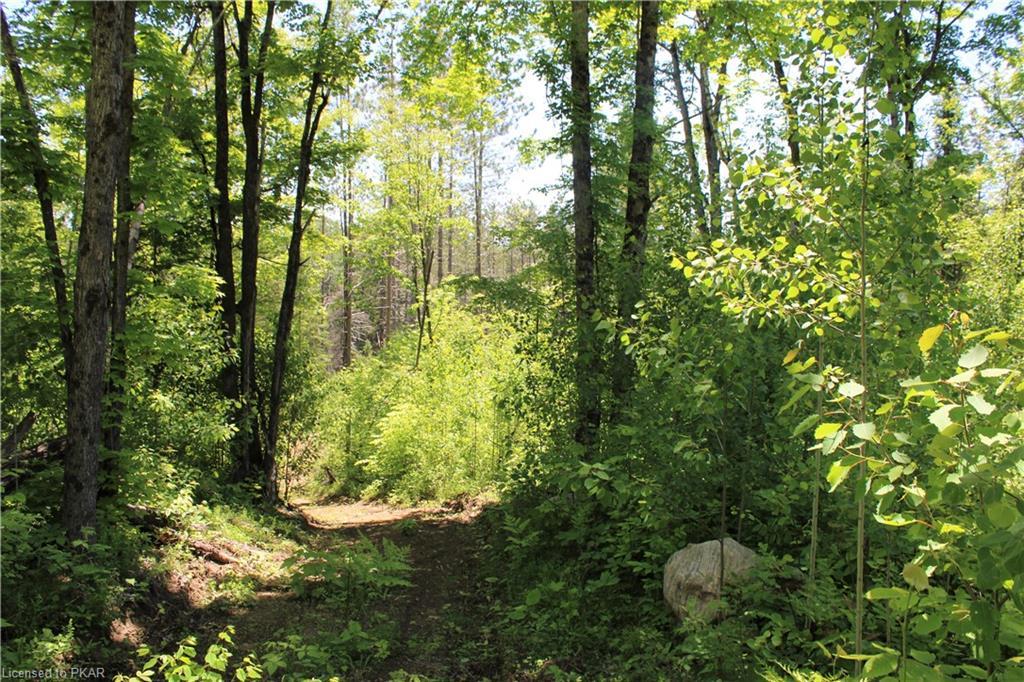 Logging Road, Hastings Highlands Ontario, Canada