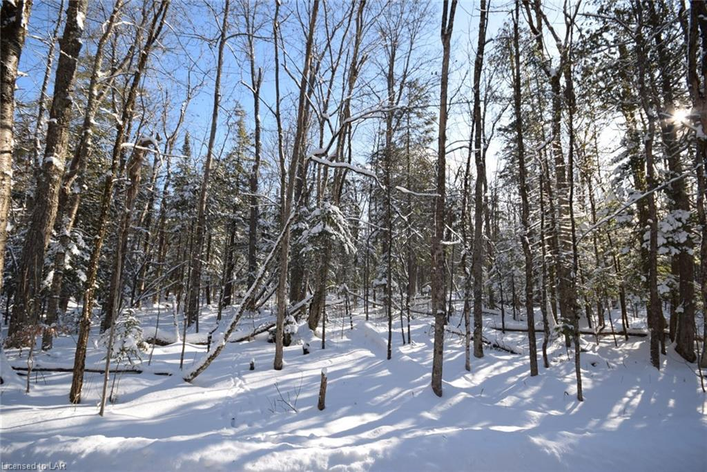 Lot 32 Eric Potter Road, Haliburton Ontario, Canada