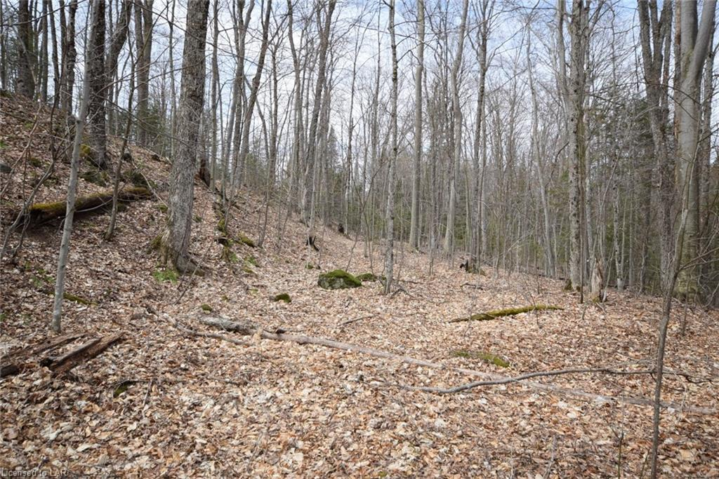 Lot 22 Tower Road, Haliburton Ontario, Canada