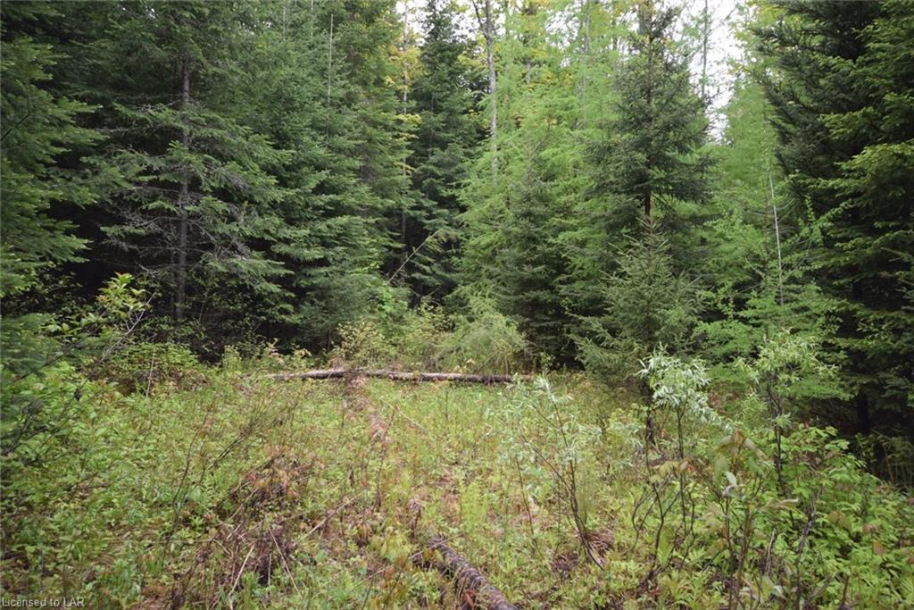 Lot 29 Harburn Road, Haliburton Ontario, Canada