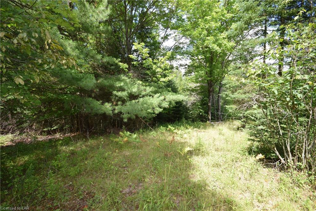 Lot 25 Cattail Road, Haliburton Ontario, Canada