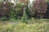 # 503 Highway, Gooderham Ontario