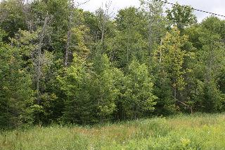 0 Mcfadden Road, North Kawartha Ontario, Canada