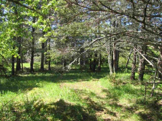 Lot Jones Firth Road, Lydgate Nova Scotia