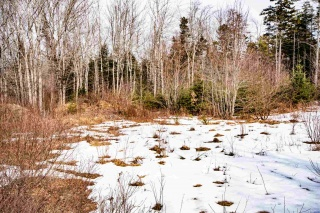 Lot 05-1 Deamond Crescent, Auburndale Nova Scotia, Canada